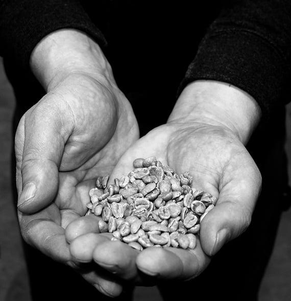 649px.raw-coffee-beans-1200px