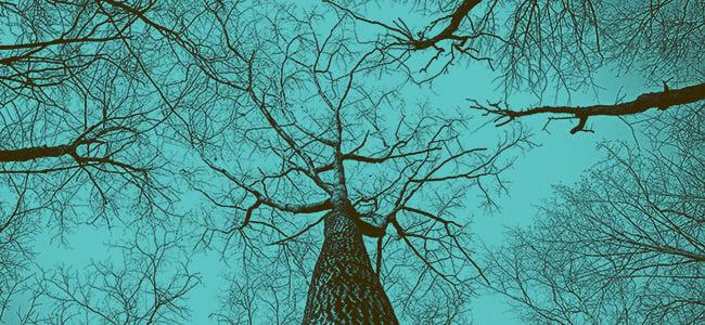 Tree.Eliada.teal.650x150