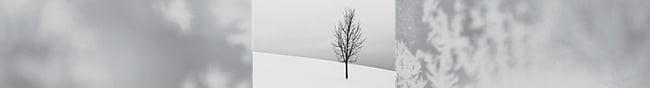 single.tree.february.banner