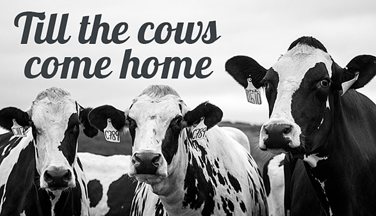 till-the-cows-come-home-cover
